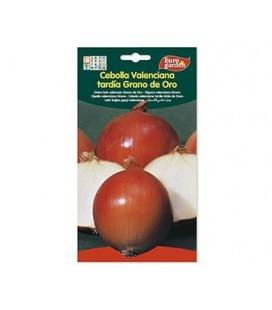 Semillas de Cebolla Valenciana Tardia Grano De Oro 4 g de Eurogarden