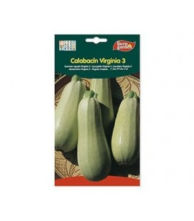 Semillas de Calabacin Virginia 5 g de Eurogarden