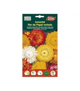 Semillas de Inmortal Flor De Papel 2 g de Eurogarden