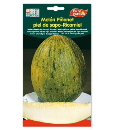 Melón Piñonet piel de sapo-ricamiel.