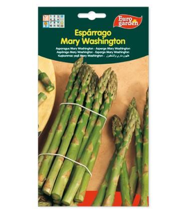 Espárrago Mary Washington