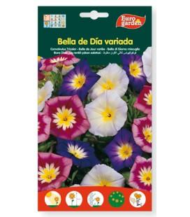 Semillas de Bella de dia variada 6 g de Eurogarden
