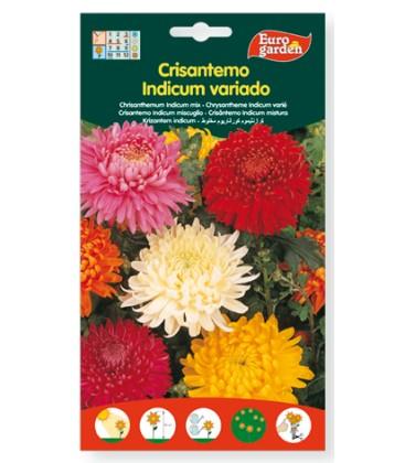 Crisantemo indicum variado.200 mg de Eurogarden.