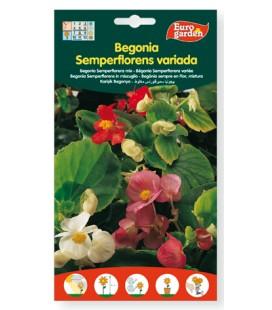 Semillas de Begonia Semperflorens variada 60 g Eurogarden