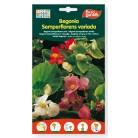 Semillas de Begonia Semperflorens variada,60gr Eurogarden
