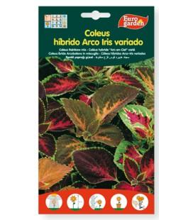 Semillas de Coleus híbrido Arco iris variado 400 mg Eurogarden