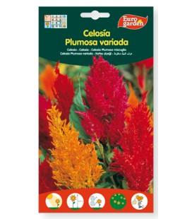 Semillas de Celosía Plumosa variada 1,5 g de Eurogarden
