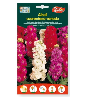 Semillas de Alhelí cuarenteno variado 800 mg de Eurogarden