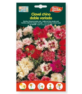Clavel chino doble variado, 1 gr de eurogarden.