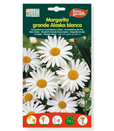 Margarita grande alaska blanca, 2gr de Eurogarden.