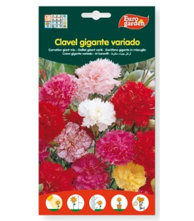 Clavel gigante variado, 600mr de Eurogarden