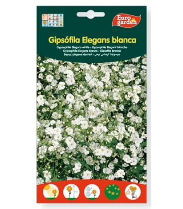 Gipsófila Elegans blanca 6g de Eurogarden