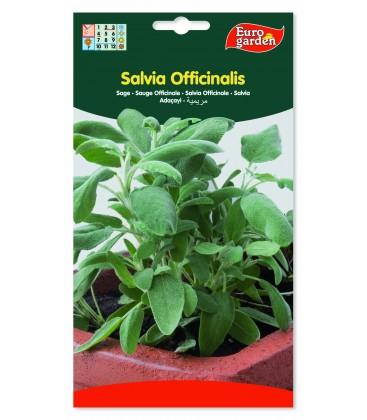 Salvia officinalis.