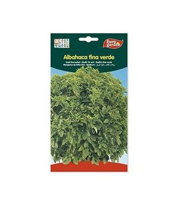 Semillas de albahaca fina verde
