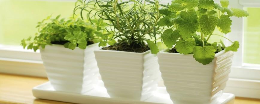 Otoño: Plantas de interior