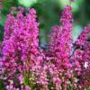 Plantas de flor, arbustos y césped en octubre