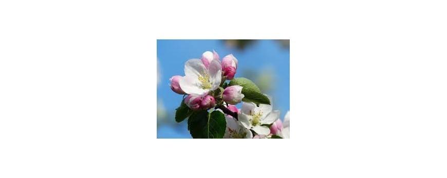 Cuidados árboles y arbustos en abril