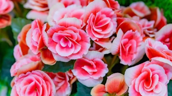 Abril: flores mil, cuidados plantas flor y de interior