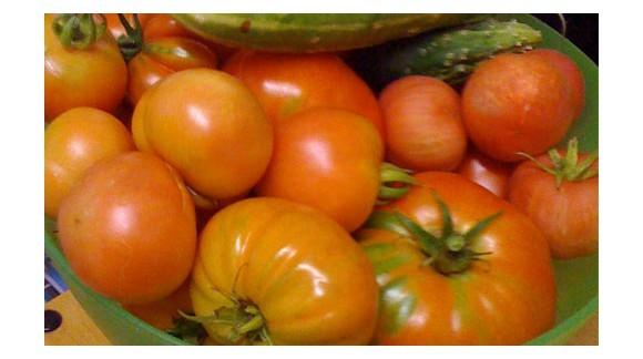 El tomate y su cultivo