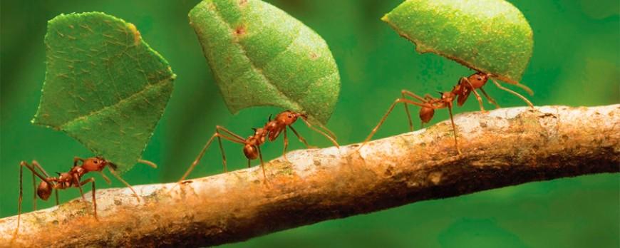Cómo eliminar a las hormigas con productos naturales
