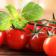 El cultivo de tomates