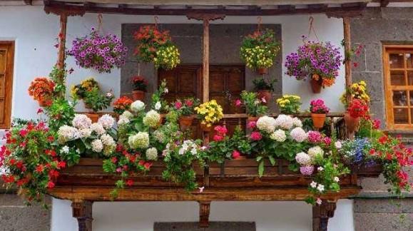 Las mejores plantas para su jardín o terraza