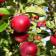 Tratamiento Invierno para frutales